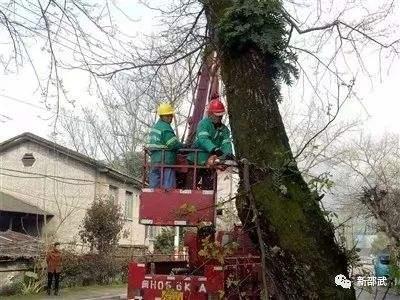 修剪枯树危树 消除安全隐患